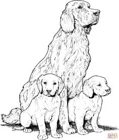 Beagle with Puppies favorite Dog Colouring pages Pinterest