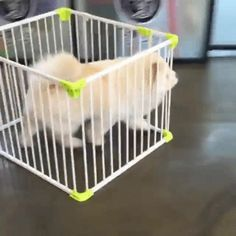 dog escape cage kennel trending #GIF on #Giphy via #IFTTT http://gph.is/1Q5F02f