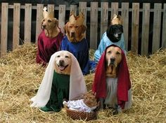 A dog's nativity ... Re-pinned by StoneArtUSA.com ~ affordable pet memorials since 2001