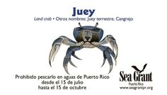 Juey info.