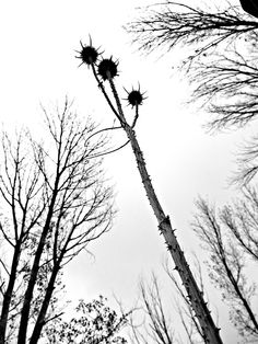 A great low angle shot of the treetops, including this strangely fascinating one. The black and white colour really has a dramatic effect on this shot and stands out perfectly.