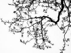 Black locust branches against gray sky. Black and white simplicity. Photo by stilllearningtosee.com  #trees #photography #art #outdoors