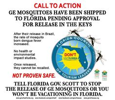 CALL TO ACTION: NO GE MOSQUITOES! CALL & EMAIL FLORIDA Gov. SCOTT (850) 488-7146 Email here: http://www.flgov.com/contact-gov-scott/email-the-governor/   Tell him to stop the release of GE mosquitoes - because he's the only one who can stop it - or you won't be vacationing in Florida.