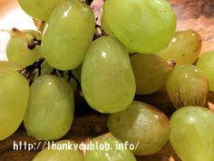 残留農薬の落とし方!野菜や果物に使える方法5つとは? | Otama Journal☆幸せの種|琵琶湖を眺めながらアラフィフ夫婦が綴る日々の暮らしレビューブログ