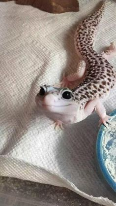 Discover & share this Smile GIF with everyone you know. GIPHY is how you search, share, discover, and create GIFs. Cute Animal Pictures, Funny Pictures, Leopard Gecko Morphs, Funny Animals, Cute Animals, Pet Travel, Happy Smile, Happy Sunday, Pets