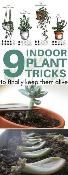 PHEW! This guide finally helped me pick the perfect indoor plants that aren't toxic to my pets! Plus, it shows you exactly how much water and sun they need. I pinned these cheat sheets to my gardening tips & tricks board to refer back to.