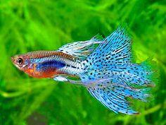 Ikan http://ruparupaikan.blogspot.com/2014/08/gambar-ikan.html