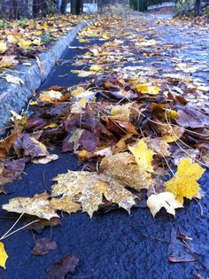 Day 63 - Autumn leaves