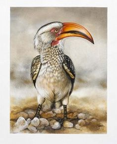 """Yellow Billed Hornbill""Robyn Abrey"