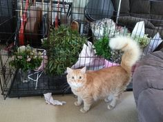 The wedding flowers were caged for their own protection   cats funny pictures