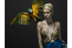 Kristian Aadnevik stunning green chiffon gold gown featured in GLASSbook with tropical birds. Stunning Photography, Editorial Photography, Animal Photography, Portrait Photography, Fashion Photography, Beauty Editorial, Editorial Fashion, Blue Gold Macaw, Wild Animals Pictures