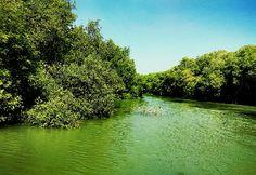 Mangrove forest, Demak, Central Java