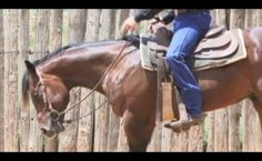 Simple exercises to slow your horse down.