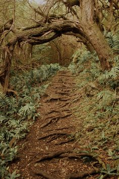 Root steps