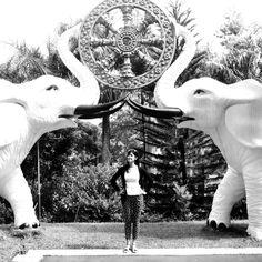 Gajah Putih