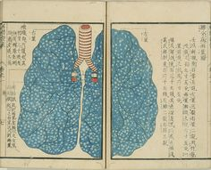 """Lungs depicted in an 1813 Japanese treatise on anatomical dissection entitled """"Kaitai Hatsumo"""""""