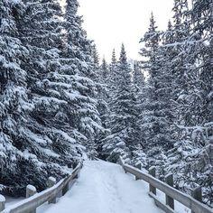 «#MatadorU student @sasha_hull doing some exploring in Alberta, Canada. Love this shot! #travelstoke  #canada #alberta #winter #snow #nature #banff…»