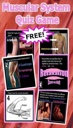 this is a free powerpoint review game covers material in the human, Muscles