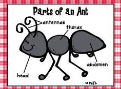Labeled body parts of ants