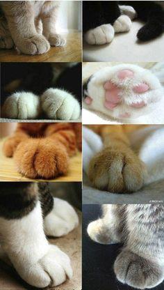 Ah! Ces pattes délicates, douces et adorables!  Des pattes de chats, des coussinets roses, de l'amour pour les minous plein mon coeur!!! ♥♥♥