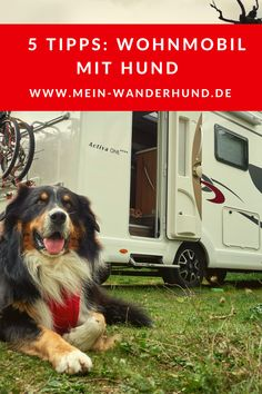 Motorhome with dog: five tips - Tips for a relaxing holiday with your dog in a motorhome Camping Gadgets, Camping Hacks, Yorkshire Terrier, Yorkie, Road Trip With Dog, Camping Outfits, Camping Clothing, Relaxing Holidays, Van Camping