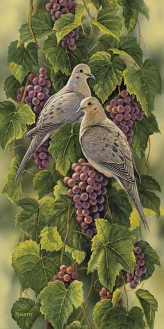 """Rosemary Millette Limited Edition Print: """" Vineyard-Mourning Doves"""" Artist:Rosemary Millette Title Vineyard-Mourning Doves Edition :S/N to 450 Limited Edition Prints Image size: x All Prints are Art Et Nature, Mourning Dove, Bird Illustration, Wildlife Art, Bird Prints, Limited Edition Prints, Bird Art, Beautiful Birds, Painting Inspiration"""