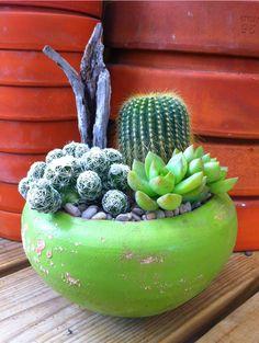 Lime Green Cactus Garden  Dripping Springs, Tx. Farmers Market