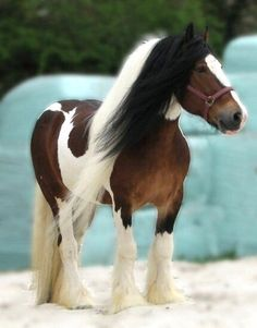 }{     Tinker stallion O'Malley