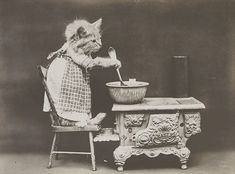 The Cook, with Cats, photographed by Harry Whittier Frees, June Photograph shows a kitten wearing a dress and stirring at a stove. Tap the link for an awesome selection cat and kitten products for your feline companion! I Love Cats, Crazy Cats, Cute Cats, Funny Cats, Funny Animal, Baby Animals, Cute Animals, Cat Dresses, Cat Memes