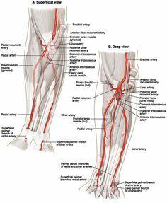 Ovid: Lippincott Williams & Wilkins Atlas of Anatomy