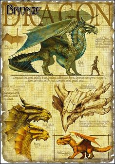 Bronze Dragons are metallics, and thus are good. The bronze is know for its kind nature and love of all things. They live by the ocean.