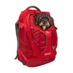 Kurgo Dog Carrier Backpack for Small Dogs and Cats G-Train Pet Backpack Airline Cat Backpack Carrier, Dog Carrier Bag, Dog Backpack, Hiking Backpack, Large Dog Carrier, Small Dog Carriers, Large Dogs, Small Dogs, Hiking Dogs