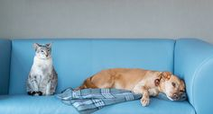 What to look for in a pet sitter.  have you used a pet sitter and how did that work out.?  http://petsplease.com.au/news/what-to-look-for-in-a-pet-sitter-54