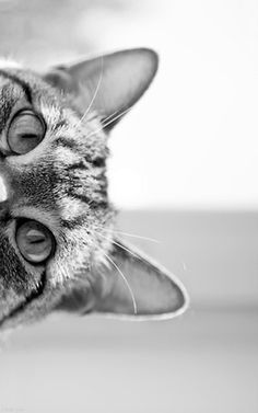 Hello / cat photos in bw