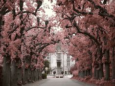 lovely! #trees #pink
