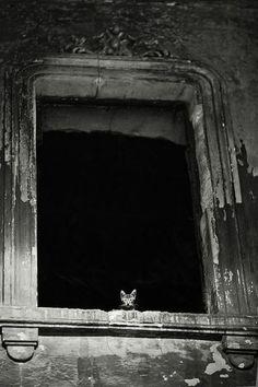 Big window....little cat