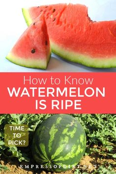 Expand Good Tomatoes Working With Container Gardening Techniques Growing Watermelon? Utilize These Tips To Know When The Fruit Is Ripe And Ready For Picking. Types Of Watermelon, Watermelon Uses, How To Grow Watermelon, Fruit Trees, Trees To Plant, Fruit Fruit, Cold Climate Gardening, Vegetable Garden Design, Vegetable Gardening
