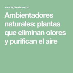 Ambientadores naturales: plantas que eliminan olores y purifican el aire