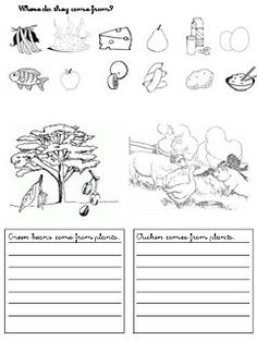 English worksheet: Where does food come from? | Where Does it Come ...