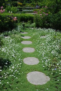 Use English chamomile or thyme as ground cover. Chamomile like dry acidic soil and can be aggressive. German chamomile grows taller than the English variety.