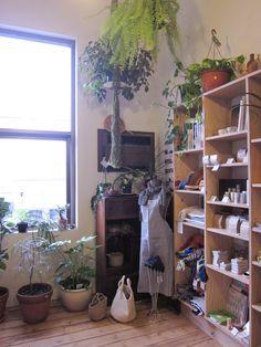 plants & shelves.