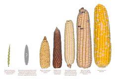 paul-mirocha_what-the-ancestors-ate_edible-baja-arizona_04-960x654.png (960×654)