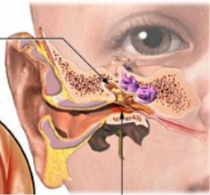 Looking at the tympanic membrane in your baby