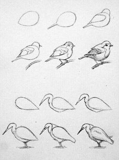 Pencil Drawing Techniques - Learn the easiest ways to draw birds. Step by Step bird drawing tutorial. Bird Drawings, Pencil Art Drawings, Art Drawings Sketches, Easy Drawings, Sketches Of Birds, Birds Drawing Images, Simple Bird Drawing, Easy Animal Drawings, Drawing Lessons