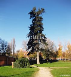 Jardines #fotografia #photography #photo #foto #microstock #buy #sold #photographer #fotografo