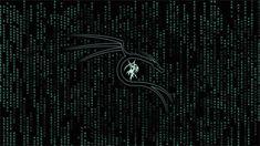 Kali Linux Wallpaper 4k Black Hd Wallpaper Wallpaper Downloads Hd Wallpaper