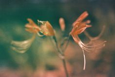 EOS 50E Contax Carl Zeiss 35 1.4 by Jiramates photo, via Flickr