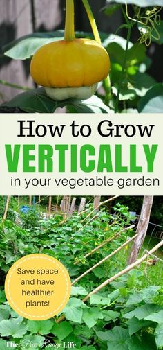Do you need more space in your garden? Learn how to grow vertically and save space and have healthier plants!