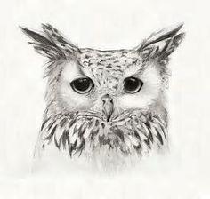 Resultado de imagen de Eagle Drawings