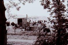 koeien bij de melkmachine